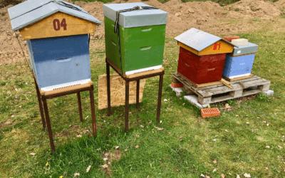 Un guide du débutant sur l'apiculture