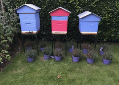 Save Bee - mettre une ruche dans son jardin