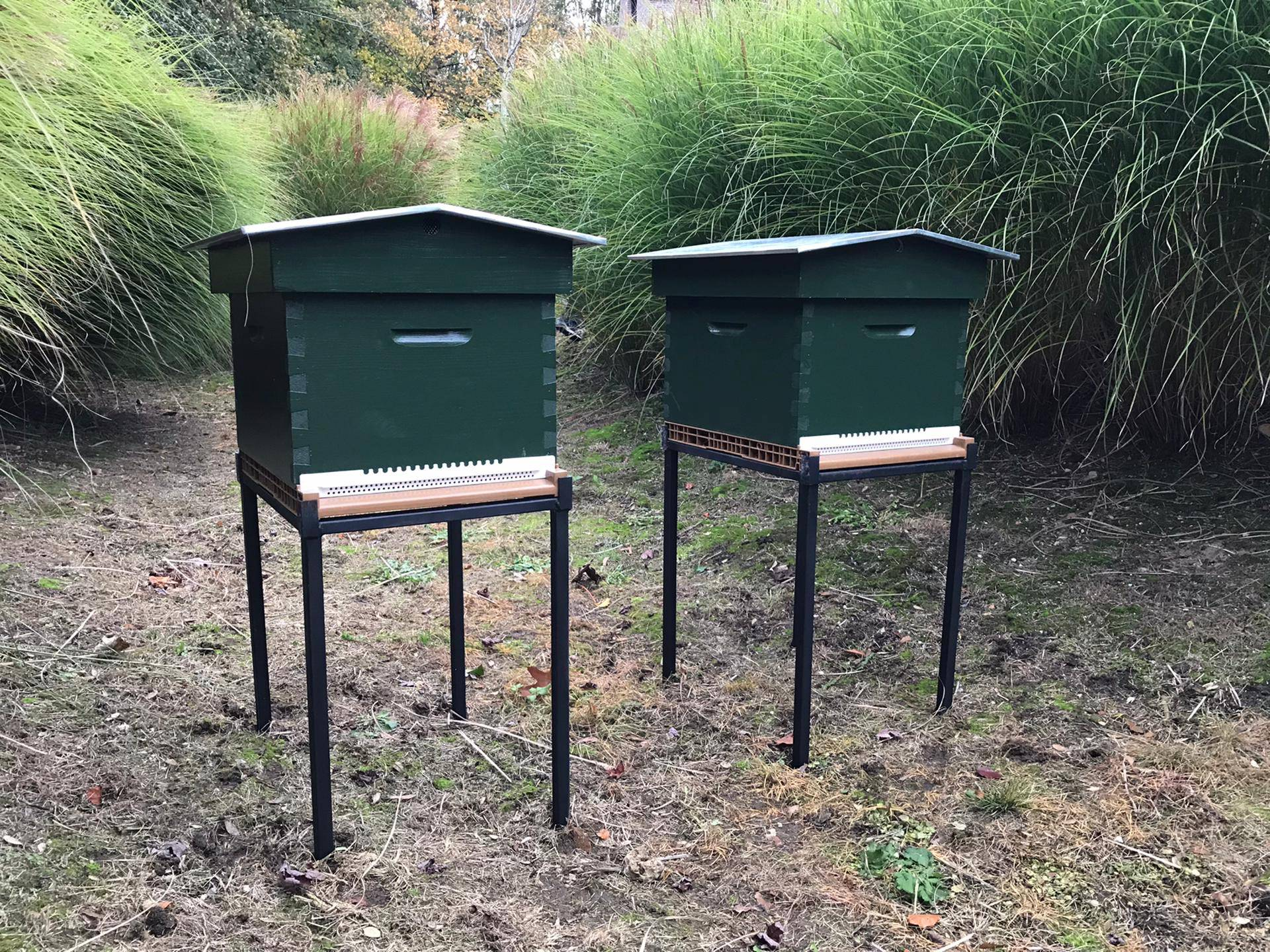 Save Bee - parrainer une ruche